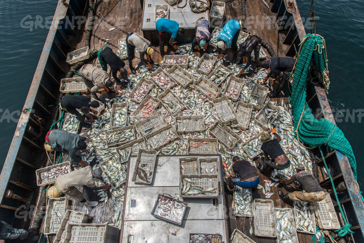 Fishing Operations on Chinese Fishing Vessel in Guinea