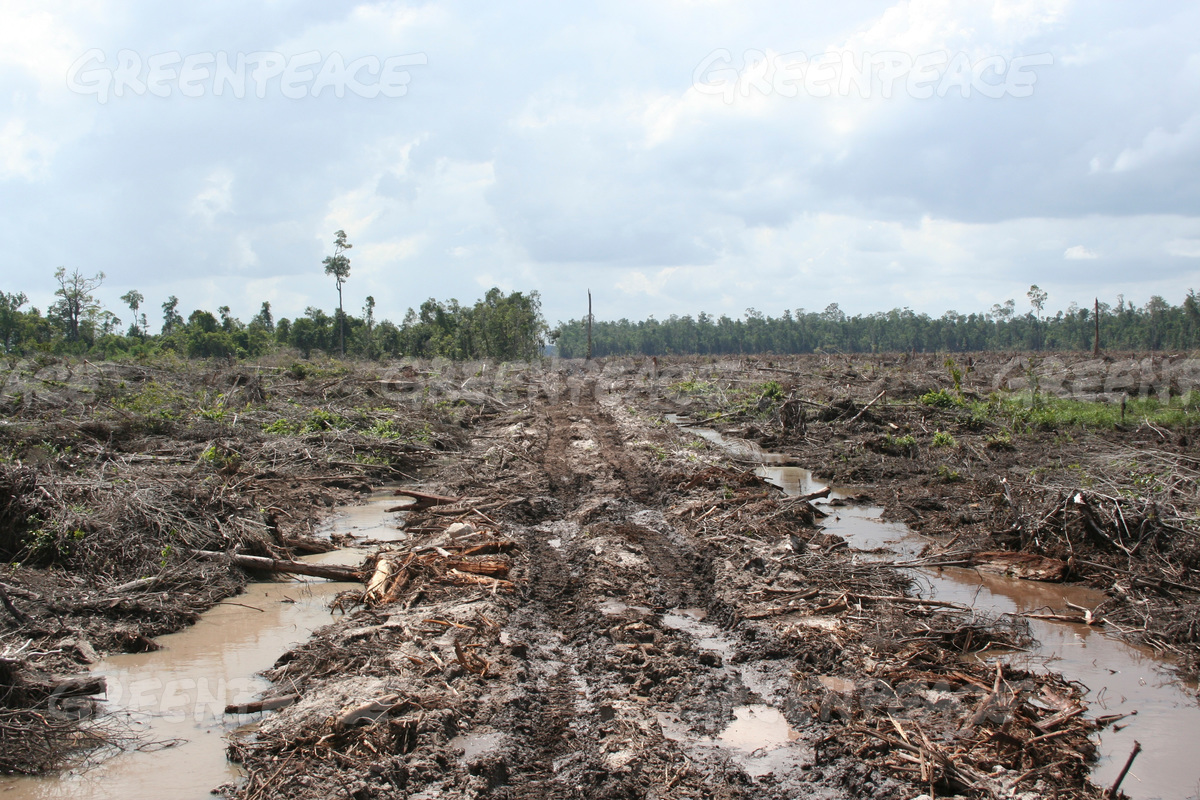 Deforested Area in Kalimantan