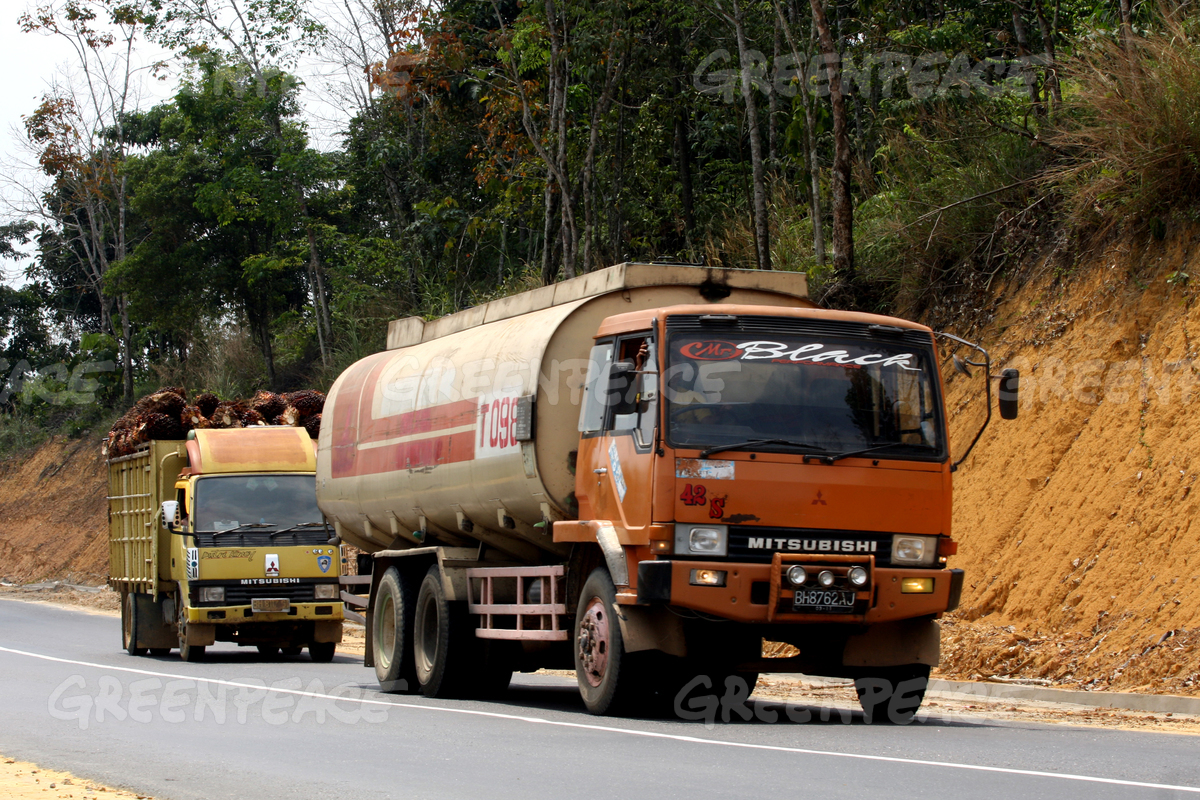 Trucks Containing Palm Oil and Palm Fruit