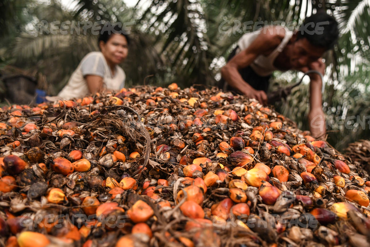 Workers in PT KU Palm Oil Concession in Jambi, Sumatra