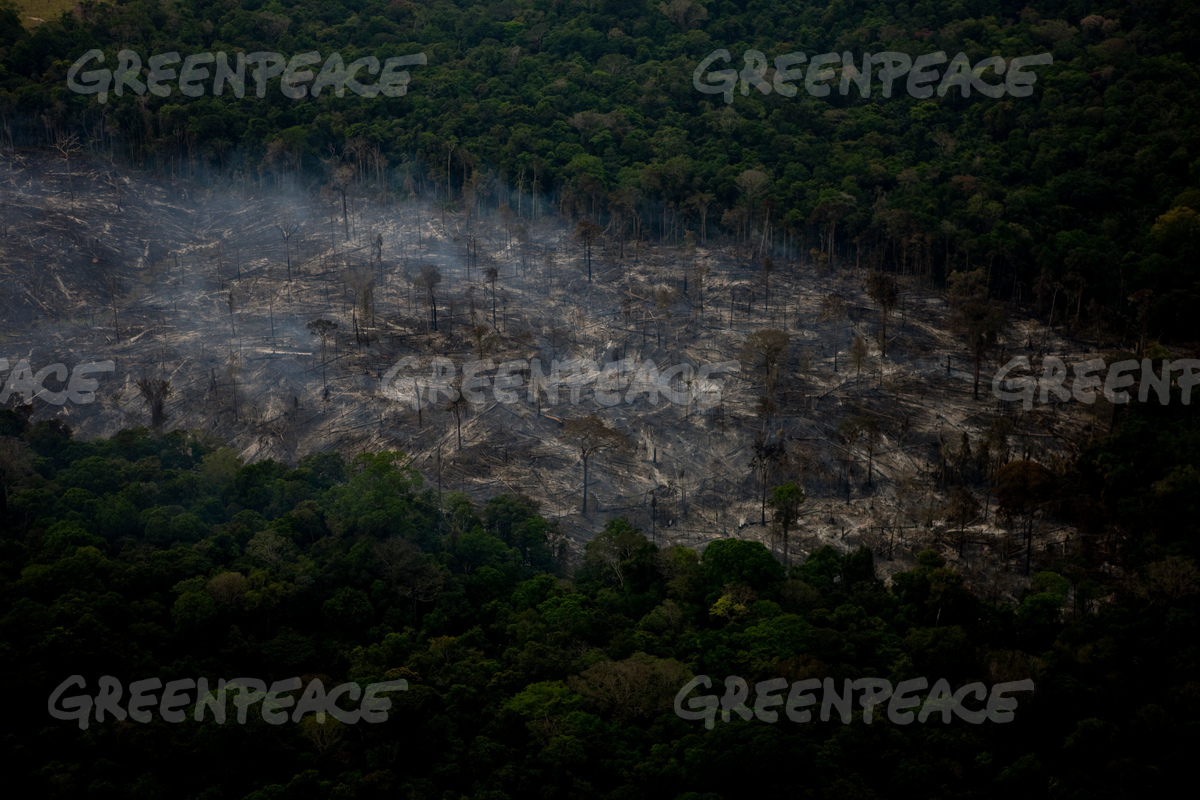 Forest Fires Smoke in the Amazon