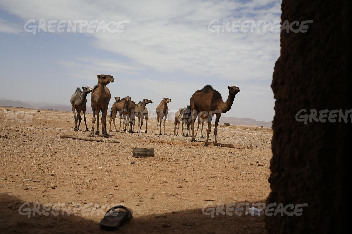 Climate Change Impacts on Moroccan Oases