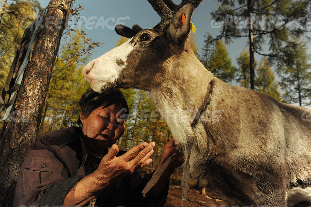 Woman with Reindeer in Greater Khingan Mountains in China
