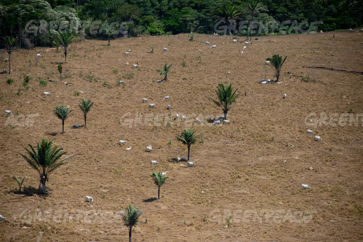 "One Year After the ""Fire Day"" in the Amazon - Santa Rosa Farm"