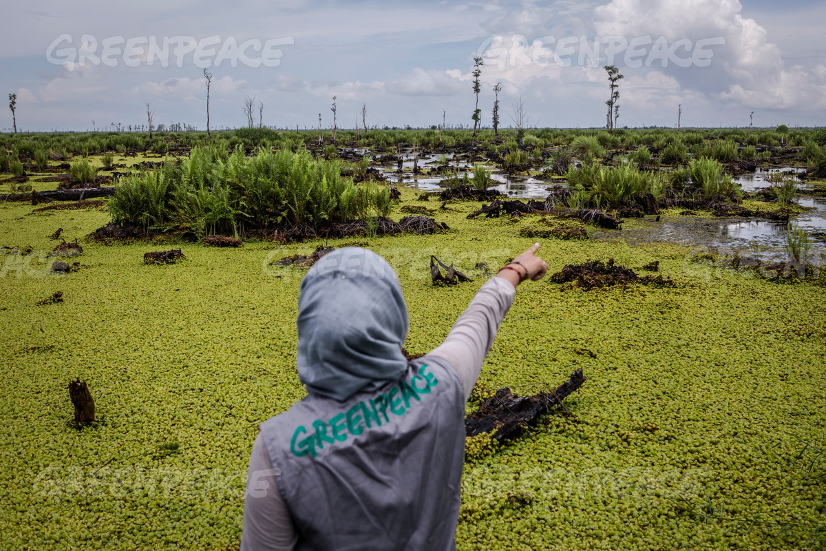 Bearing Witness in IOI Oil Palm Concession in West Kalimantan