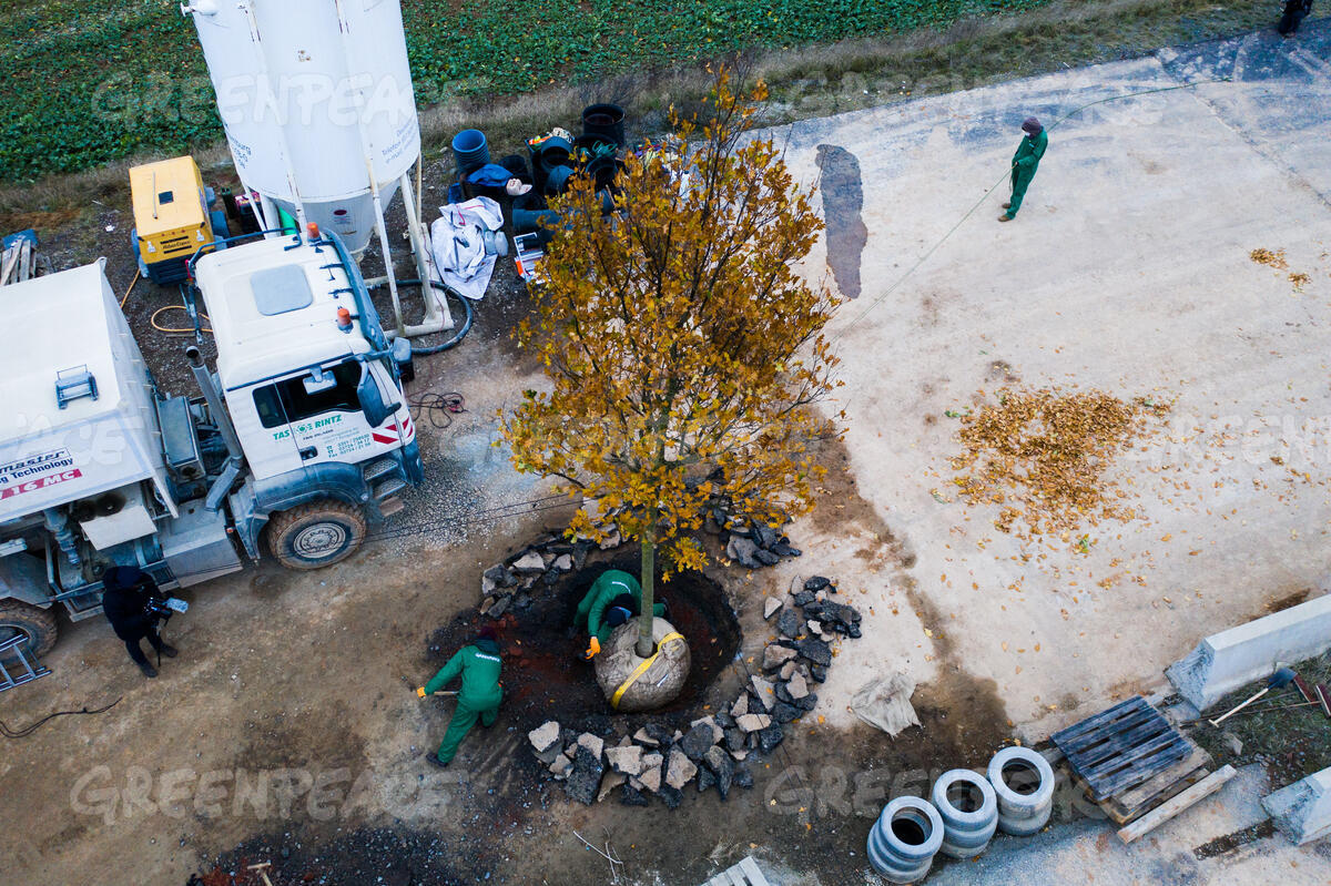 Aerial of Tree Planting Action near the Danennroeder Forest