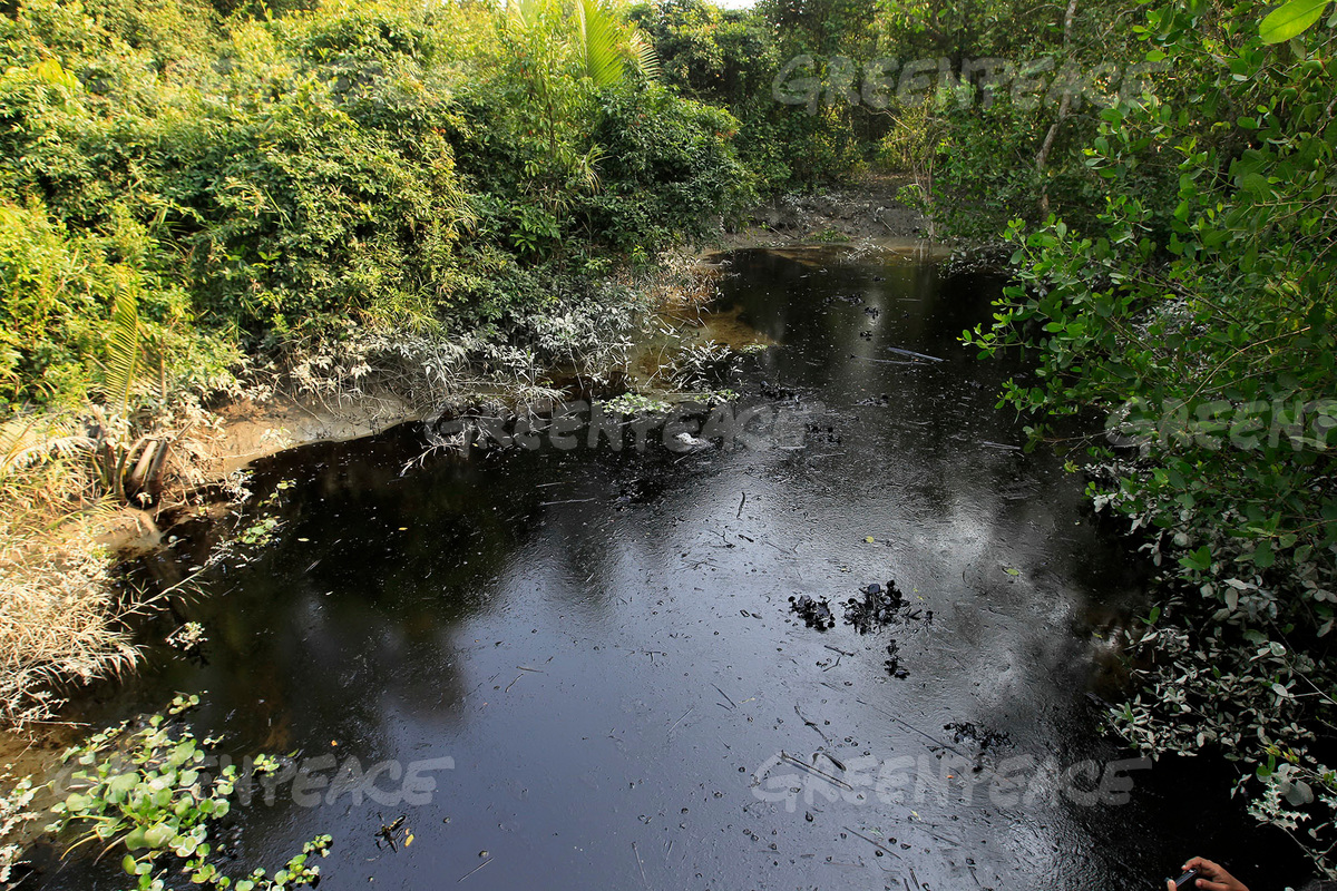 Oil Spill Aftermath in the Bangladesh Sundarbans
