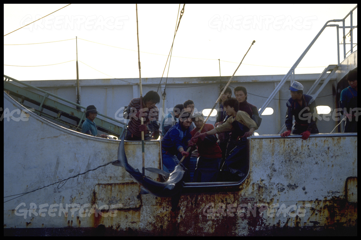 Action against Pirate Longliner Atlantic Oji No. 33