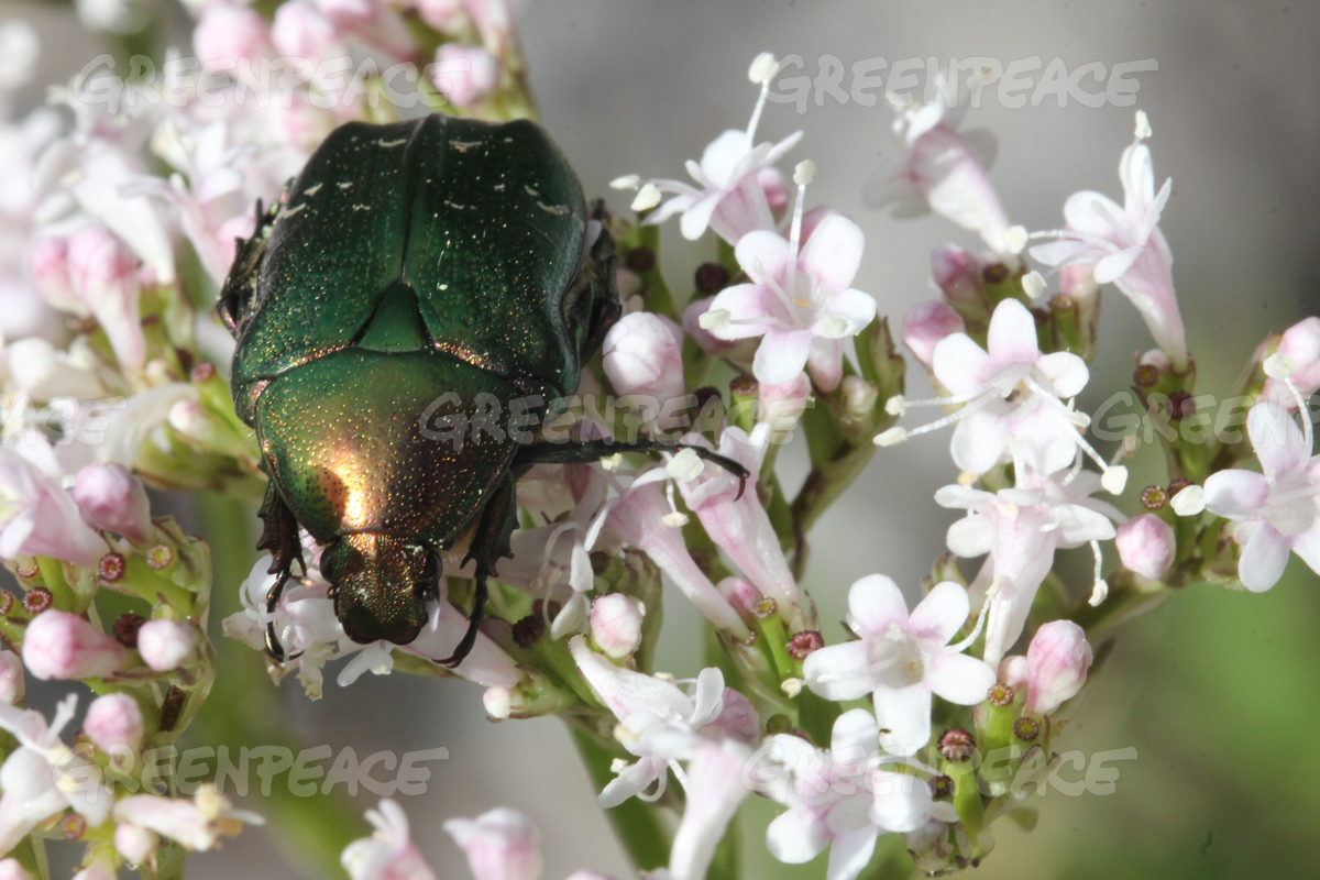 Beetle in Kurgalsky Nature Reserve in Russia