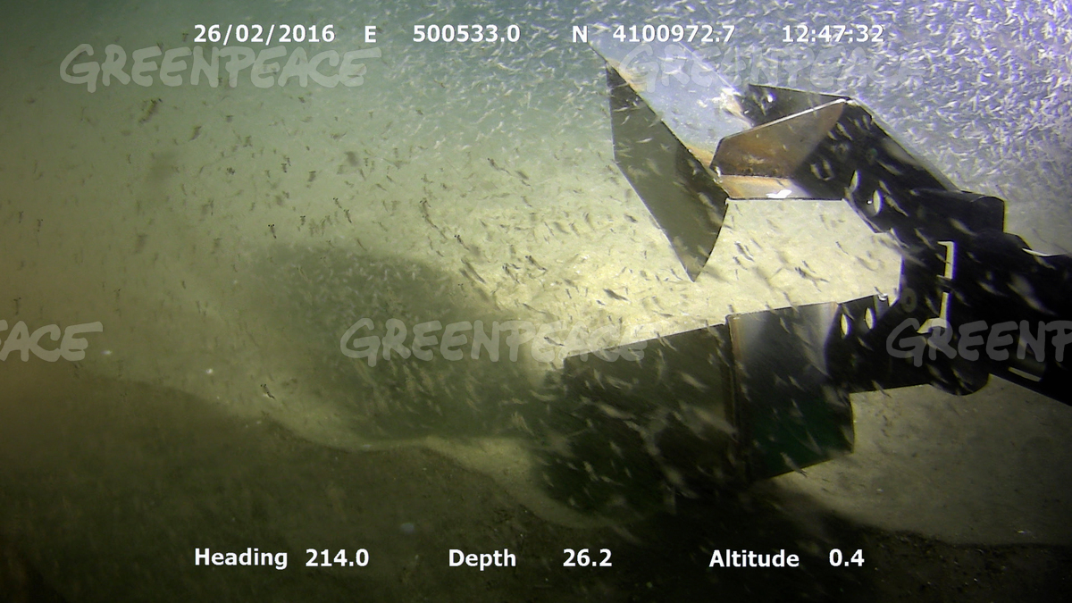 Frame Grab from Underwater Remotely Operated Vehicle (ROV)