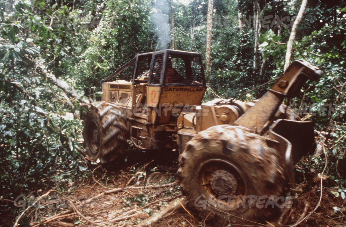 Logging by French Company Coron