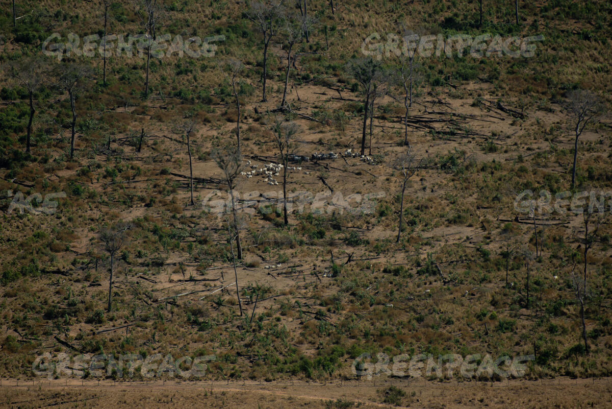"One Year After ""Fire Day"" in the Amazon in Brazil"