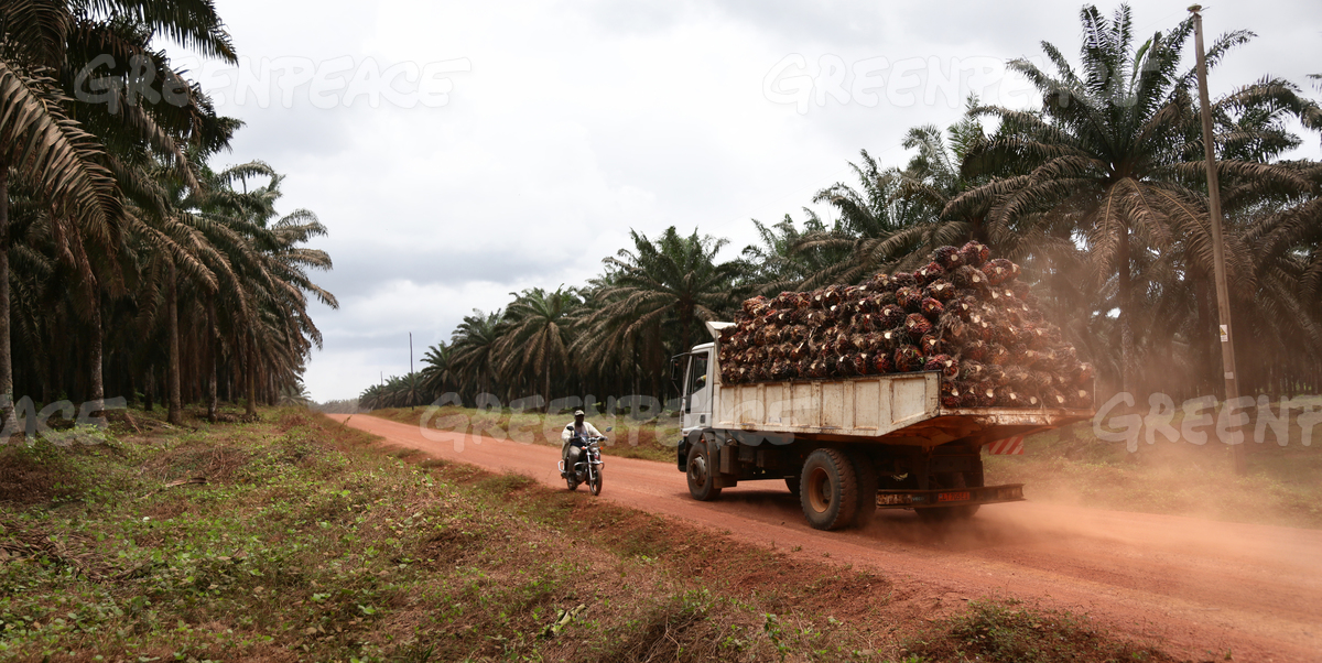 Truck Loaded with Oil Palm Fruits in Cameroon