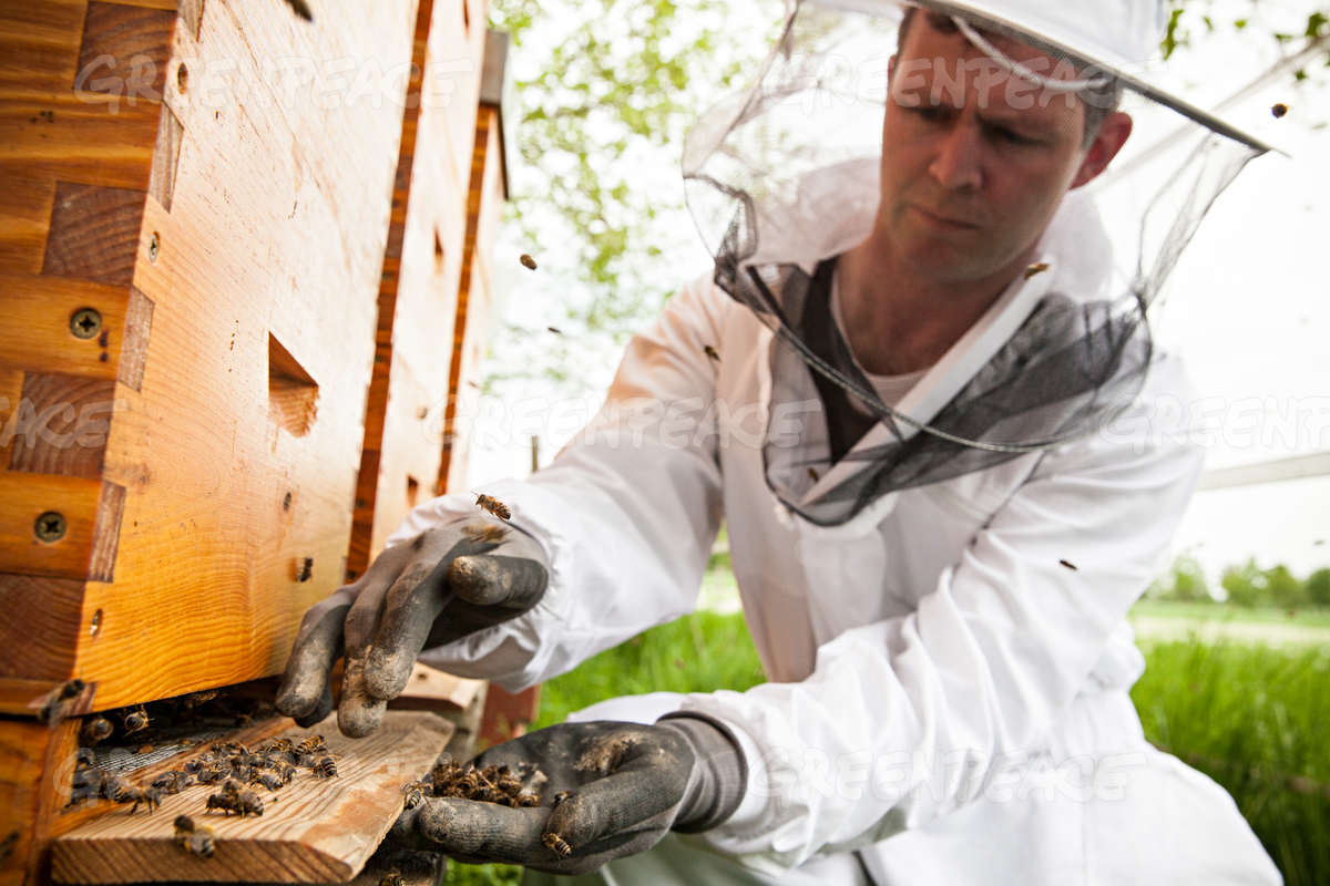 Beekeeper Collecting Dead Bees