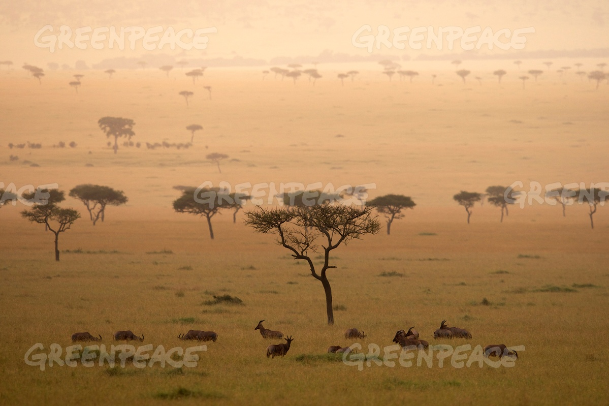 Landscape in the Savanna in Kenya