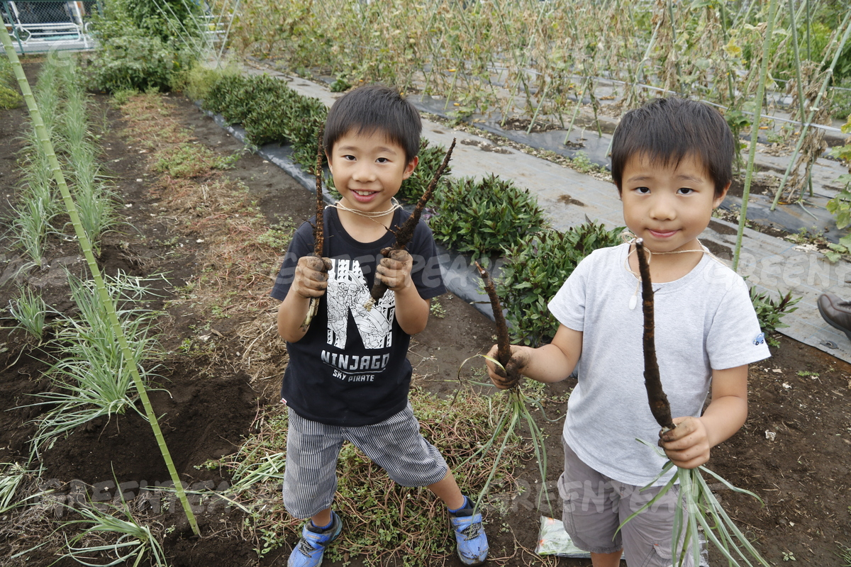 Harvesting Plants during an Ecological Agriculture and Bees Event in Japan
