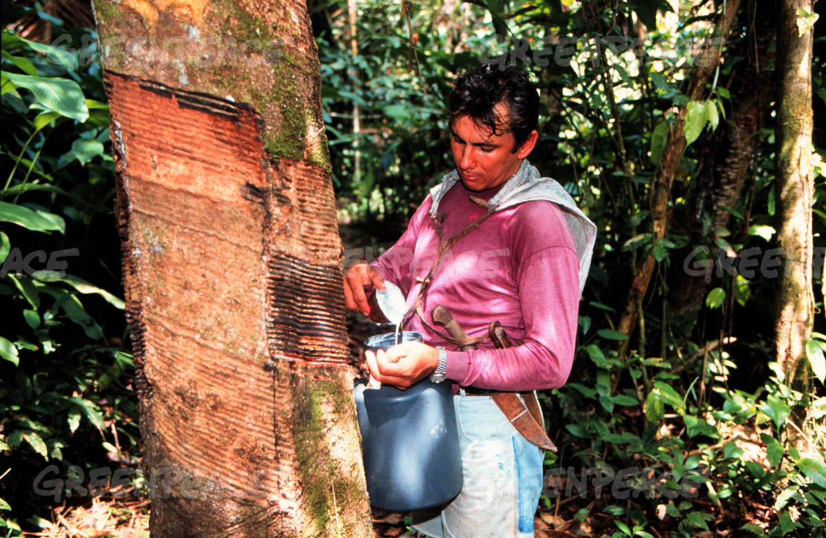 Rubber tapper in Jurua Extractive Reserve, Amazon, Brazil.