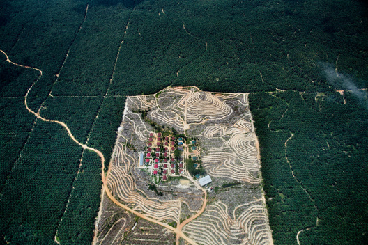 Palm Oil Plantation in Riau