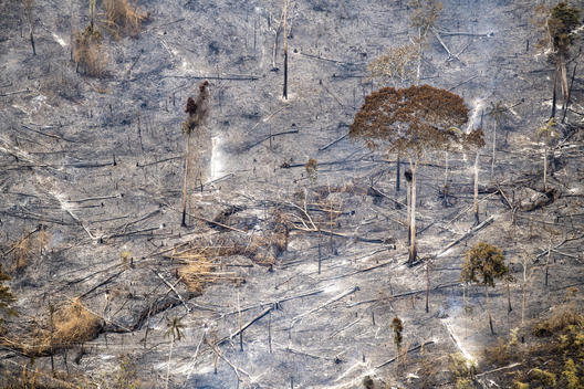 Forest Fires Aftermath in Brazilian Amazon