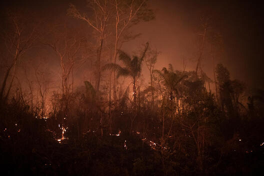 Forest Fire in the Amazon in Novo Progresso (PA)