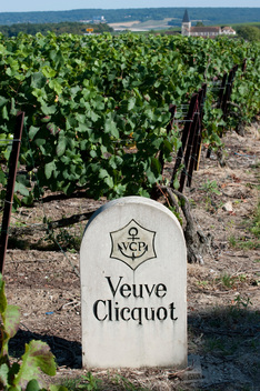 Sign in Champagne Vineyard in France