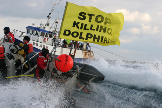 Dolphin Bycatch Tour in English Channel