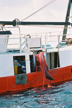 British Driftnetter Hauling in Catch in Bay of Biscay
