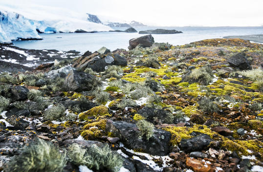Lichens and Mosses in the Antarctic