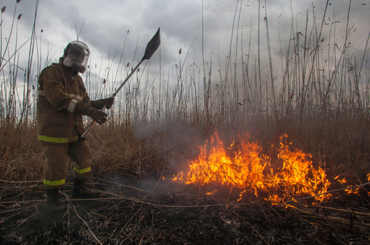 Dry Grass Fire in the Astrakhan Nature Reserve