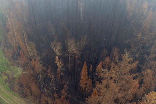Siberian Forest Fires Aftermath in Russia