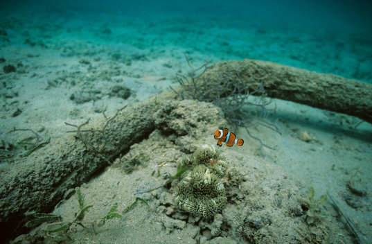 Fisheries in the Western Pacific Ocean