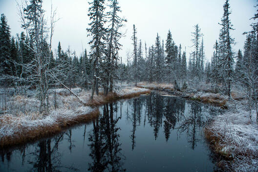 First Snow in the Forest of Vodlozero National Park in Russia