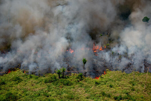 Deforestation and Fire Monitoring in the Amazon in August, 2020