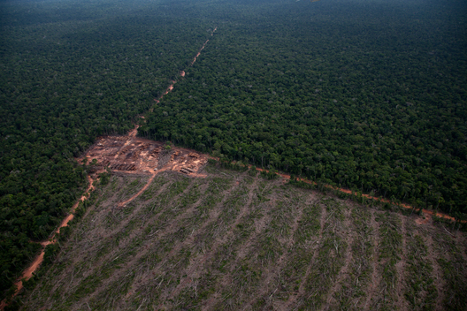 Documentation of Amazon Deforestation
