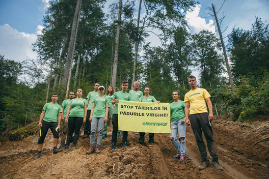Banner at Illegal Logging Site in Făgăraș Mountains in Romania