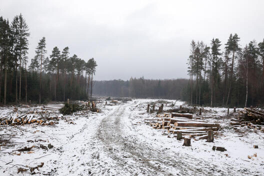 Cleared Area in the Dannenroeder Forest