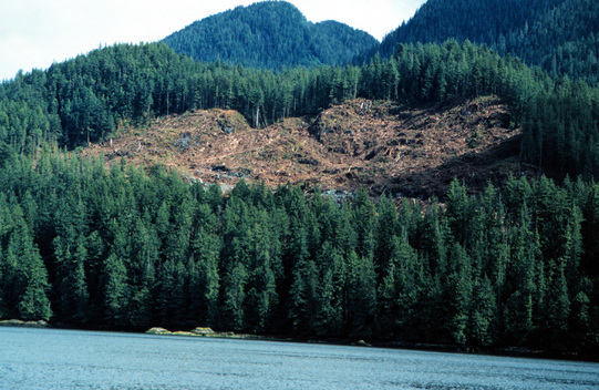 Moses Inlet Interfor clearcut in Great Bear Rainforest.