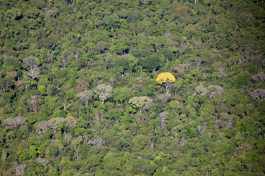 Aerial View of Forest in the Amazon