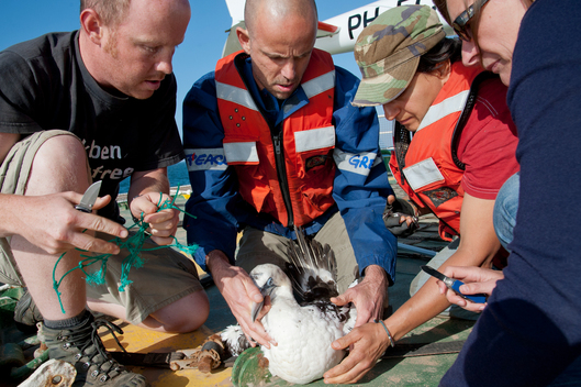 Rescue of a Gannet in West Africa