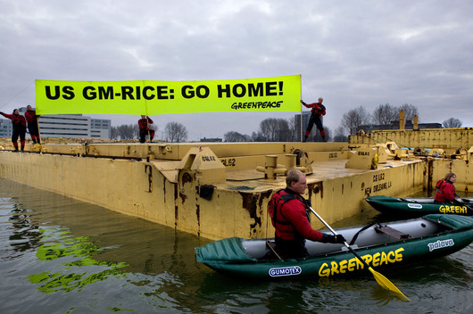 Action against GE Rice Storage in Rotterdam