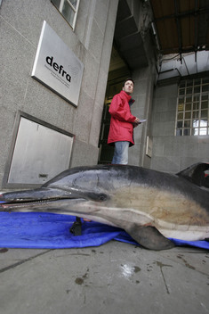 Action against Dolphin Bycatch in London
