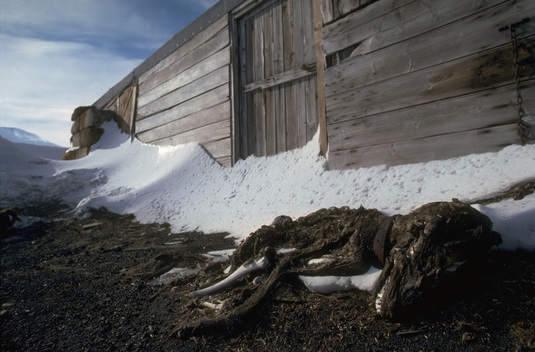 Scott's hut, Cape Evans, Antarctica.
