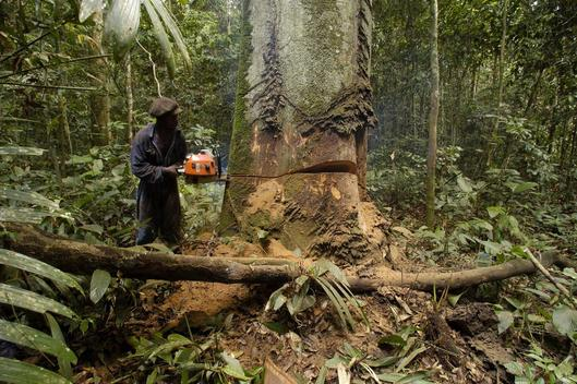Logging in Gabon Africa