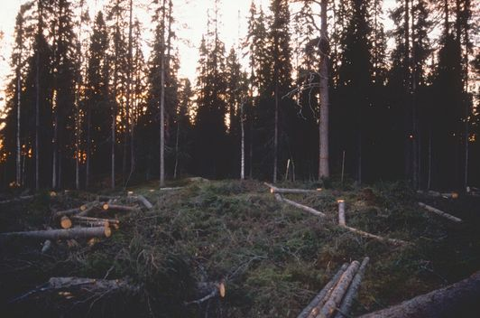 Logging in Finnish Forests