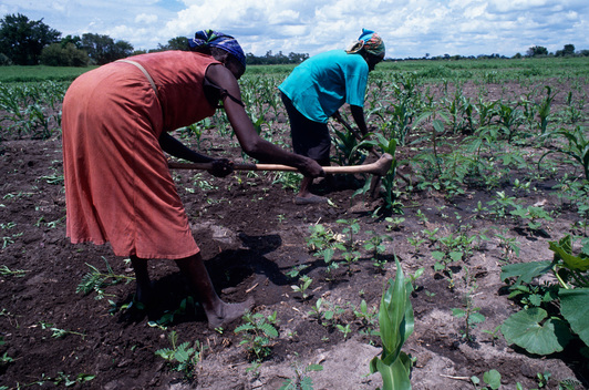 Traditional Milapo Farming in Botswana