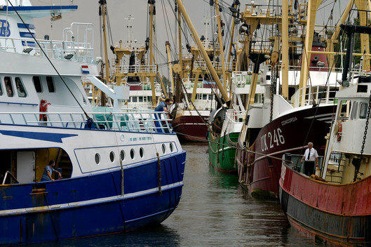 Beam Trawlers in Den Helder