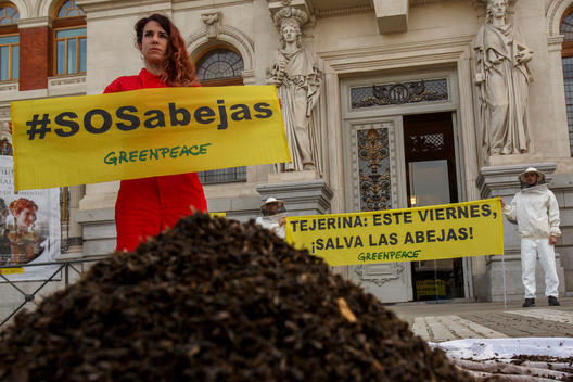 Dead Bees Action for Neonicotinoids Ban in Spain
