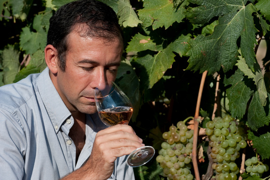 French Sommelier Franck Thomas Testing Wine