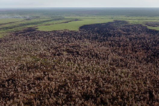 Deforested Land after Fire in Central Kalimantan