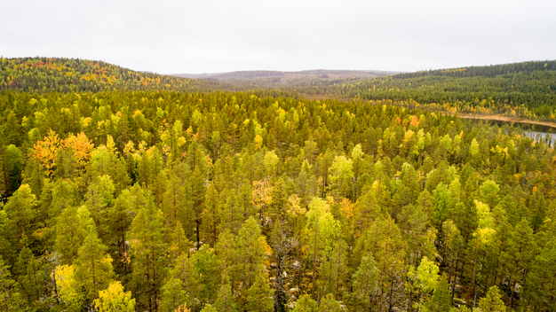 Great Northern Forest – Beauty and Destruction in Northern Sweden (Photos & Videos)